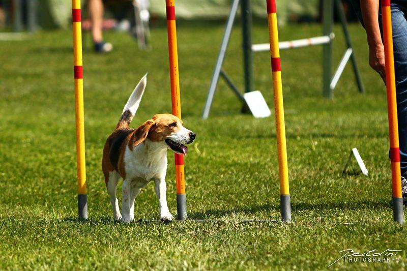 Ausbildungskurse Agilitykurse Hundesportverein Satteins-Walgau